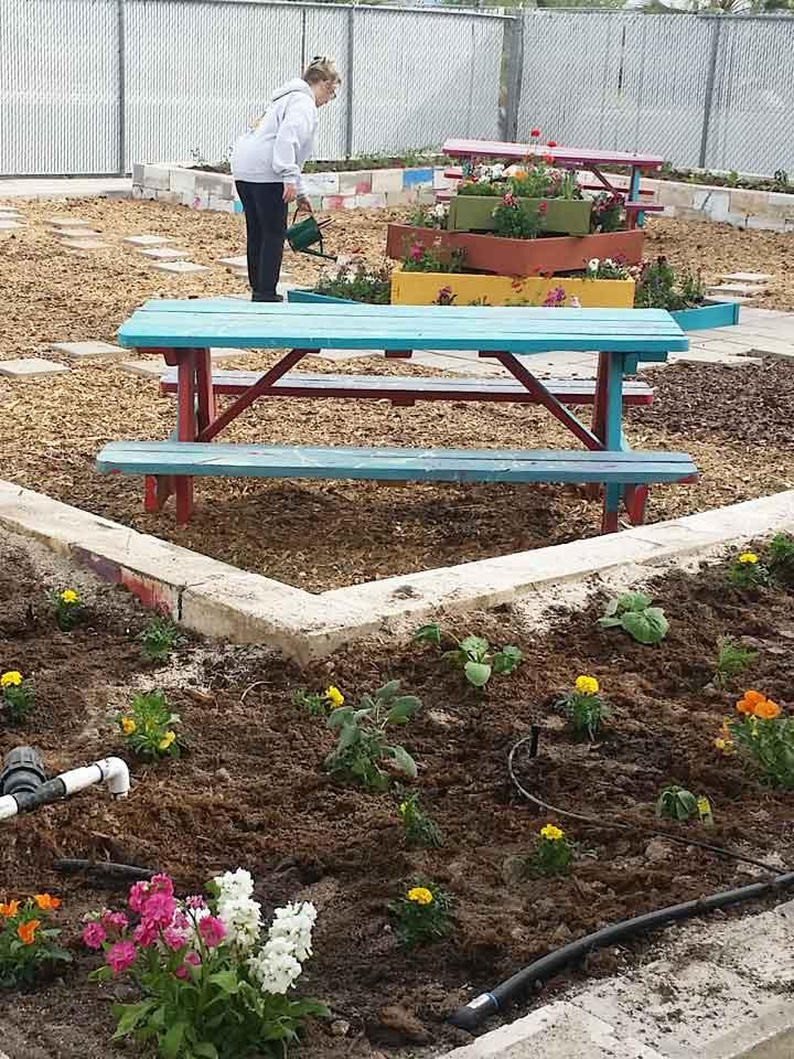 nug-planting005-720x960-042518