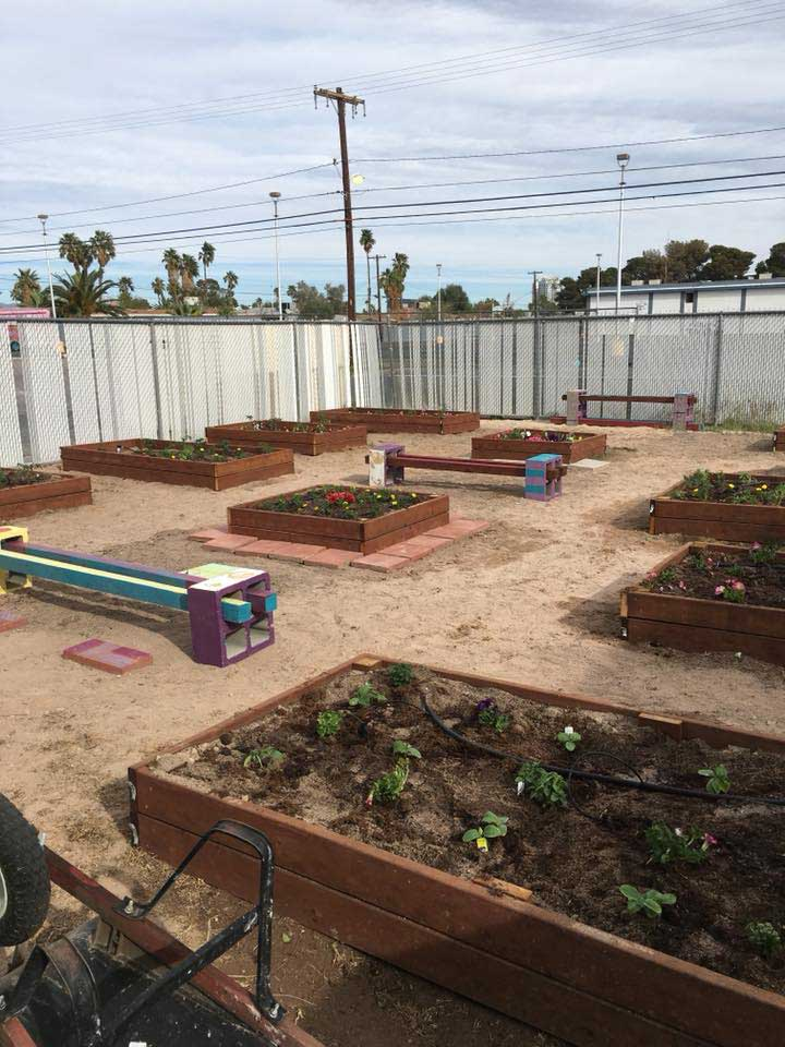 nug-planting007-720x960-042518