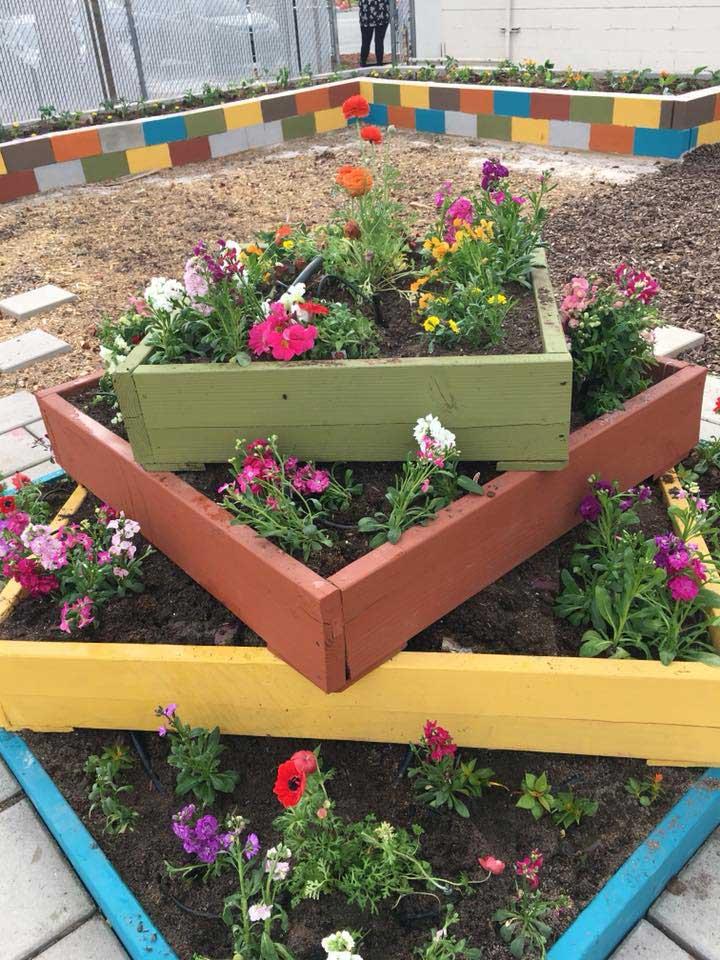 nug-planting019-720x960-042518