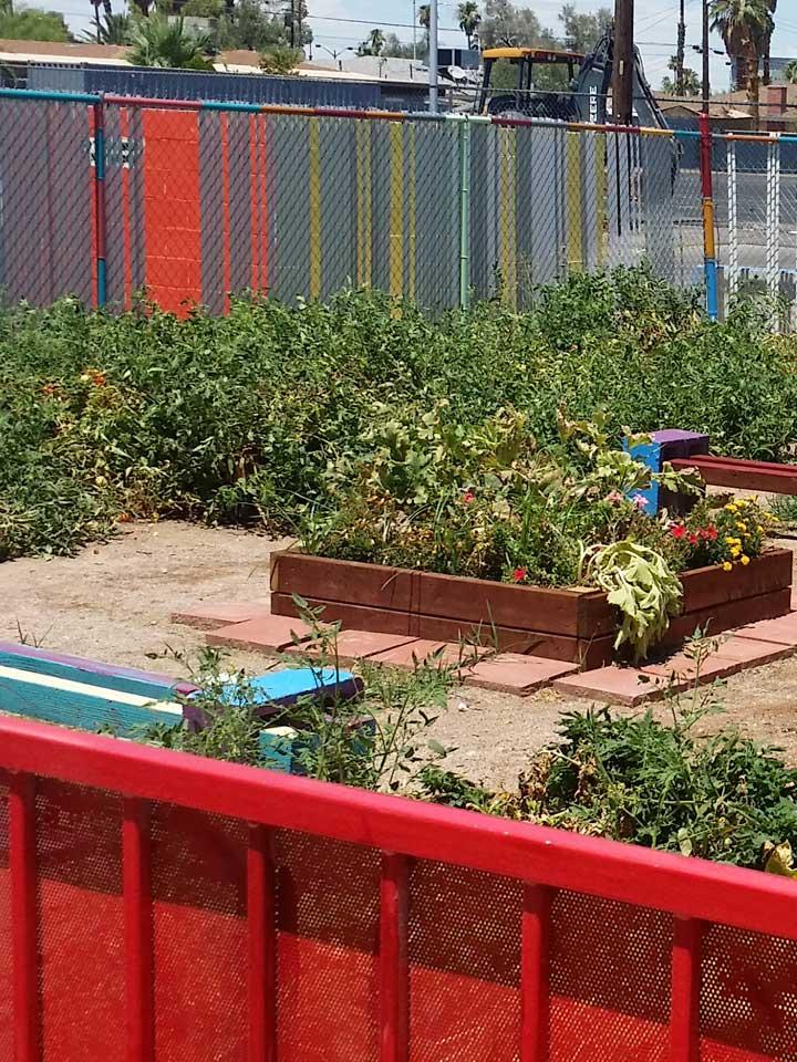 nug-planting020'720x960-071118