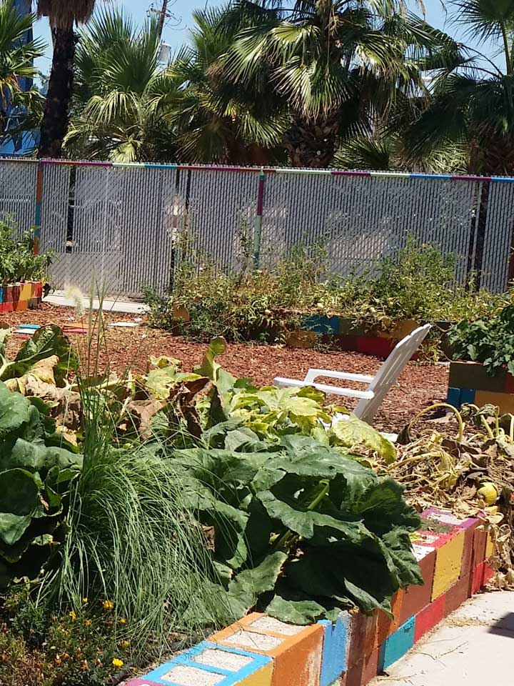 nug-planting022-720x960-071118