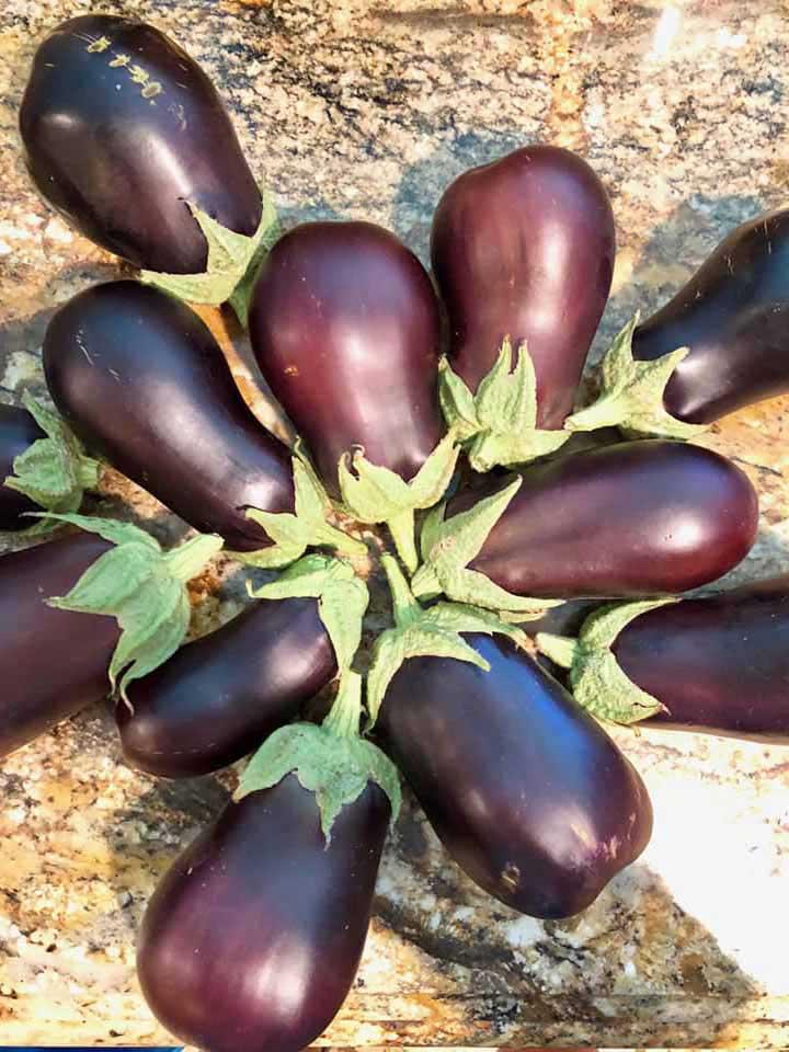 vnug-eggplant-772x960